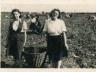 Jadwiga Chaszczewicz (z prawej) podczas czynu społecznego